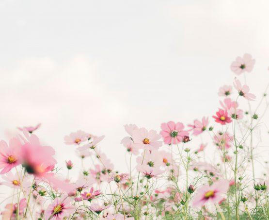 療癒,是漫步在花開遍野的草原。
