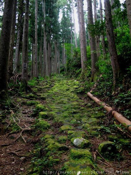 熊野.JPG