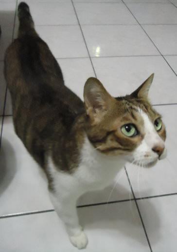 張貓.JPG