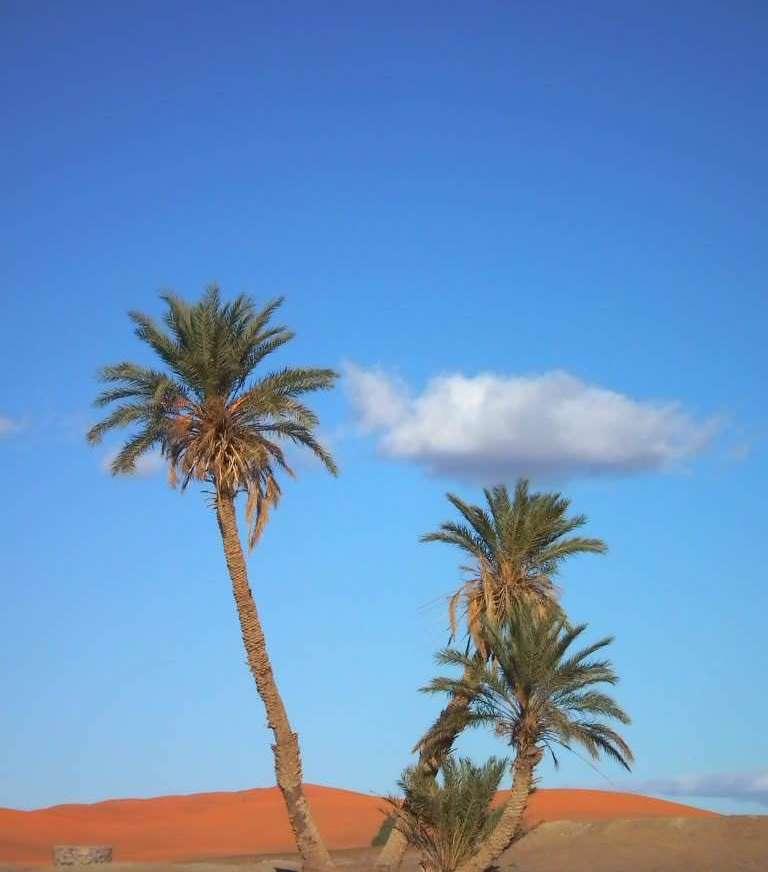 靈氣個案分享--從星際飄泊,到沙漠歸鄉